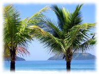 Flourish and Thrive like the Palm Tree